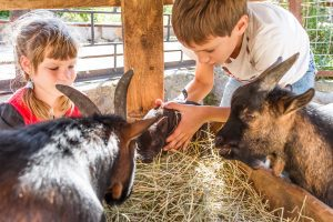 Talk to the animals - petting farms for children
